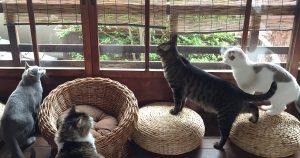 京町家猫カフェ キャットアパートメントコーヒー