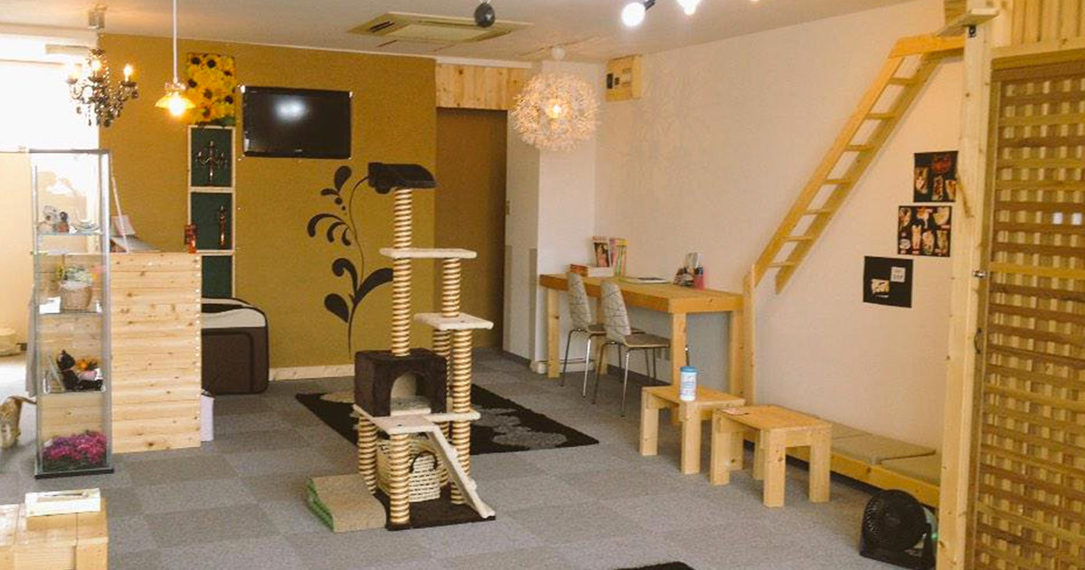 Cat cafe Miacis ねこまみれ 東加古川店