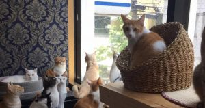 Cat cafe Miacis ねこまみれ 元町店