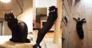 ねこびやか 黒猫cm