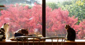 猫カフェ ねこ会議