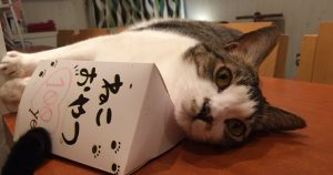 猫カフェ TANGO