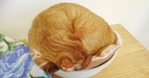 猫カフェ chouchou