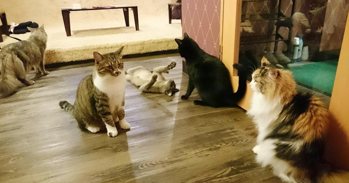 Cats cafe 22番地 小山店