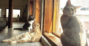 猫カフェ 美猫