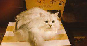 Cat Cafe Nyanny 秋葉原店
