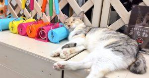 里親募集型保護猫カフェ まちねこ
