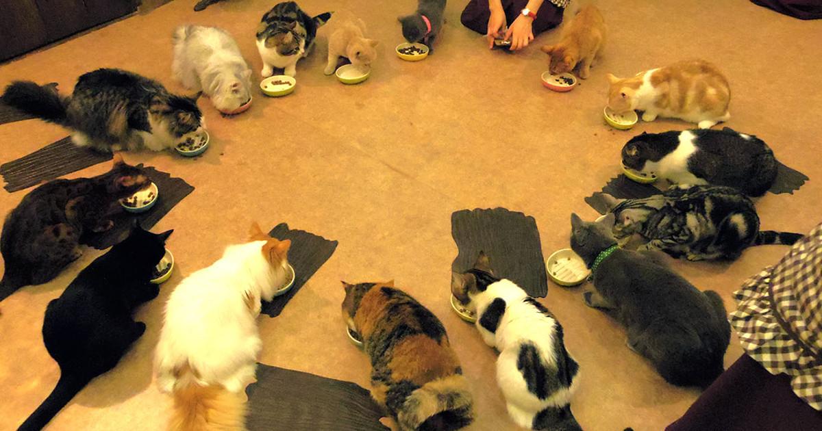 CatCafeてまりのおうち,猫,猫カフェ