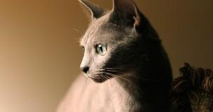 photo by The Czar....profilin'