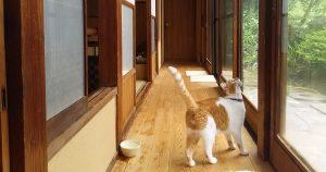 保護猫カフェ 和猫かふぇ