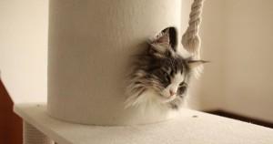 猫がいるカフェ Adagio