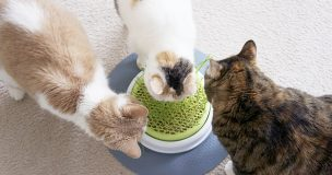 猫草たべよ〜