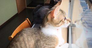 保護猫カフェ まったり処もろどうふ