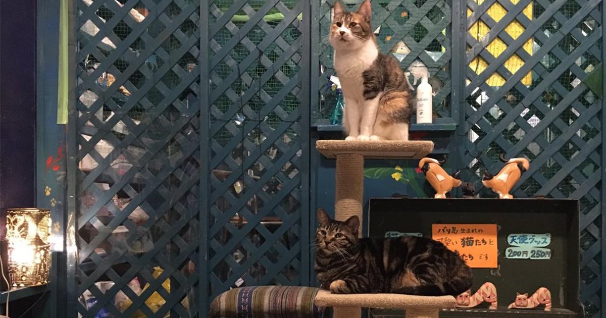 猫喫茶 不思議地底窟 青の奇蹟