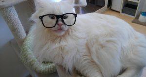 猫カフェ NYAON