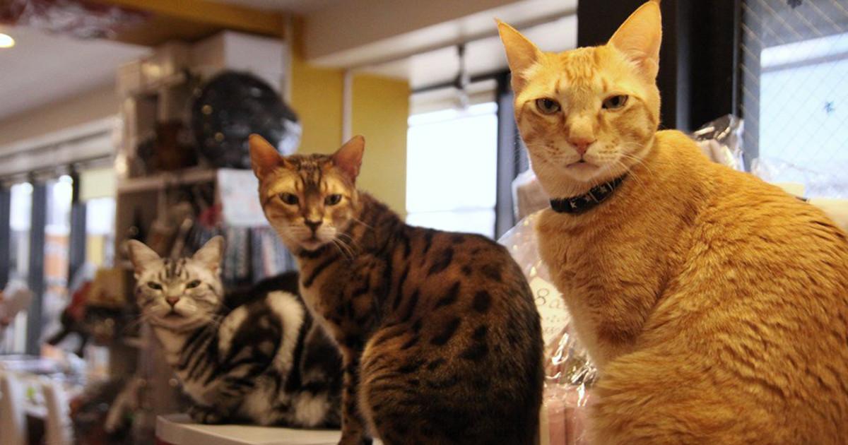 猫まるカフェ Ueno