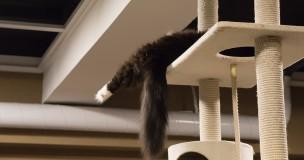猫が好きな場所