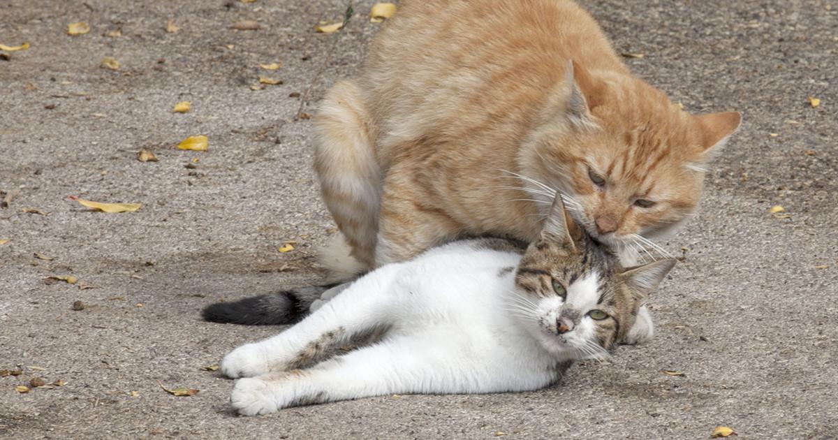 連れ戻される猫