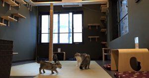 猫喫茶 空陸家 長崎浜町店