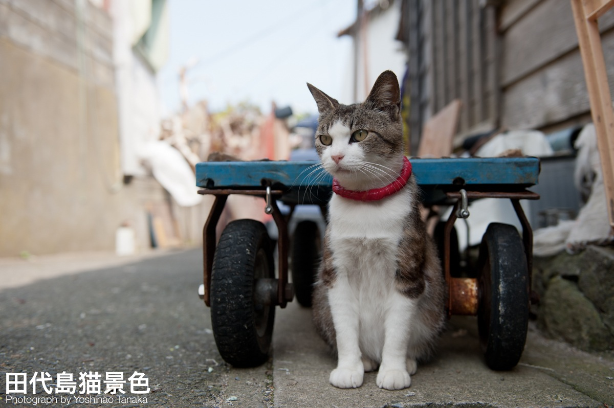 photo by Cats in Town Blog