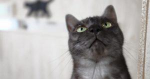 保護猫カフェ かぎしっぽ