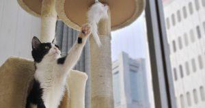 譲渡型猫カフェ にゃんくる 桜木店