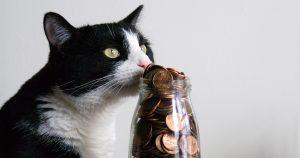 猫と一緒に暮らすのに必要な費用はどれぐらい?