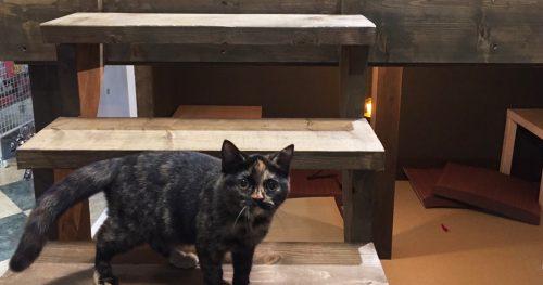 猫喫茶 空陸家 いわき店