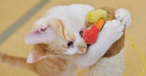 猫の噛み癖