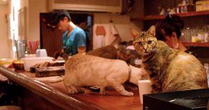 猫に関われるお仕事