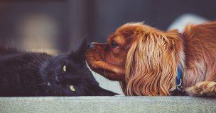 終わらない派閥争い…猫派なら主張するべき7つの推しポイント